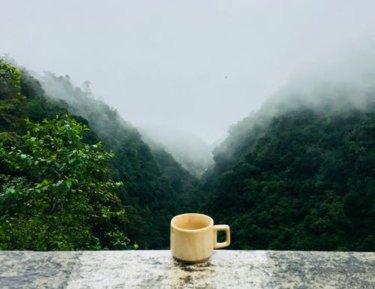 トラジャコーヒーって何?美味しいの?幻のグルメコーヒーについて解説。