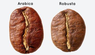 ロブスタ種とアラビカ種の違いとは?ロブスタ種はまずいって本当?